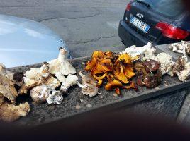 funghi velenosi 1