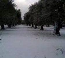 bitonto neve