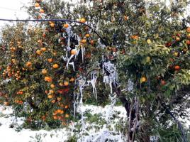 neve puglia campagna 7 gnnaio 2017