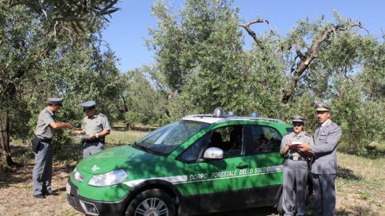forestale ulivi