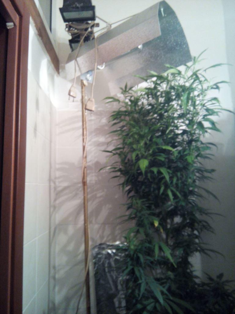 serra droga bagno