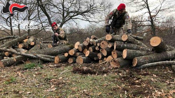 cacciatori legna 2